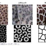 生き物の模様は数式で決まる? チューリング・パターンとは