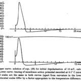 神経を伝わる電気信号を数式に:ホジキン-ハクスリー方程式